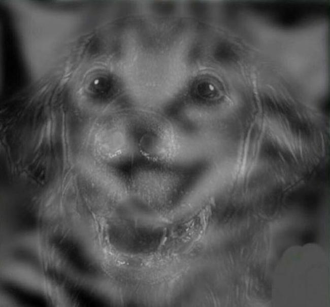 Hình Ảnh Bạn Nhìn Thấy Là Chó Hay Mèo Sẽ Tiết Lộ Bạn Thuộc Tuýp Người Nào?